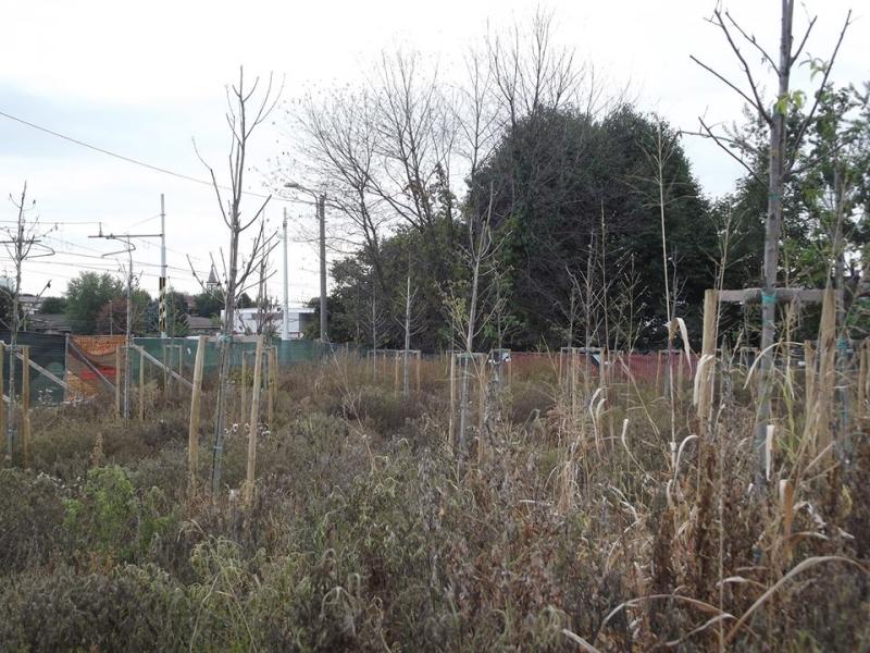 Una foto delle piante dell'area del nuovo mercato pubblicata sui social network