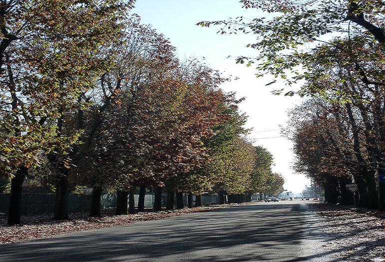 Il viale alberato di Corso Milano - Foto scattata nell'autunno 2013